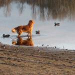 Land Use dog training